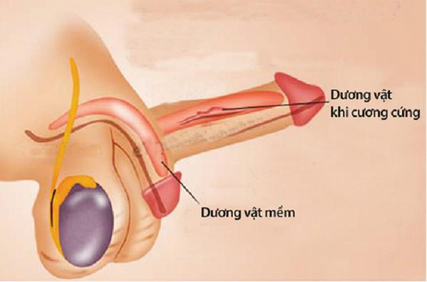 Các bệnh về tinh hoàn thường gặp